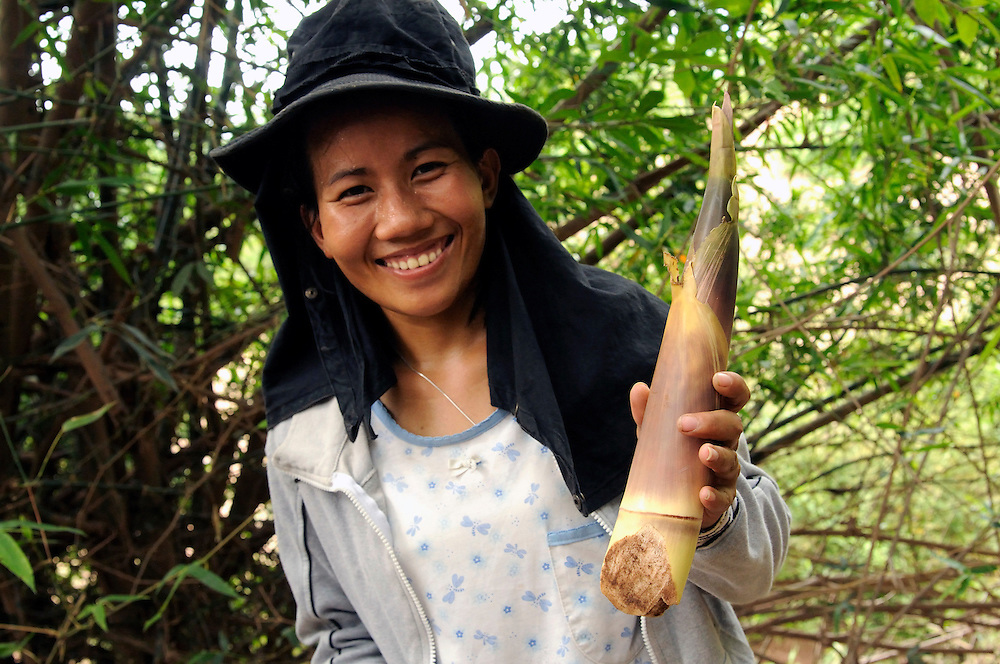 "Saiyasouk Buakeo, age 24, from the Mines Advisory Group female team shows a bamboo shoot she found as food in the forest.  Laos is a poor country with few jobs.  The women are well paid by Laos standards and are given a food allowance.  However, many of their family members often depend on their income so they find creative ways to save money locating food in the forest.  They are also paid in US Dollars which has declined significantly over the last year affecting their income...Laos was part of a ""Secret War"", waged within its borders primarily by the USA and North Vietnam.  Many left over weapons supplied by China and Russia continue to kill.  However, between 90 and 270 million fist size cluster bombs were dropped on Laos by the USA, with a failure rate up to 30%.  Millions of live cluster bombs still contaminate large areas of Laos causing death and injury.  The US Military dropped approximately 2 million tons of bombs on Laos making it, per capita, the most heavily bombed country in the world. ..The women of Mines Advisory Group (MAG) work everyday under dangerous conditions removing unexploded ordinance (UXO) from fields and villages...***All photographs of MAG's work must include (either on the photo or right next to it) the credit as follows:  Mine clearance by MAG (Reg. charity)***."