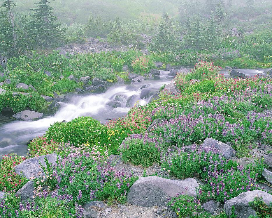 flowing creek and wildflowers in meadow, Mt Rainier, Mt Rainier National Park