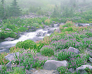 flowing creek and wildflowers in meadow, Mt Rainier, Mt Rainier National Park