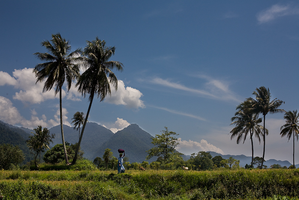 Keutapang Village near Banda Aceh - Aceh, Indonesia  Nov. 2008. Saniah makes her way home after bringing her family lunch in the rice fields.