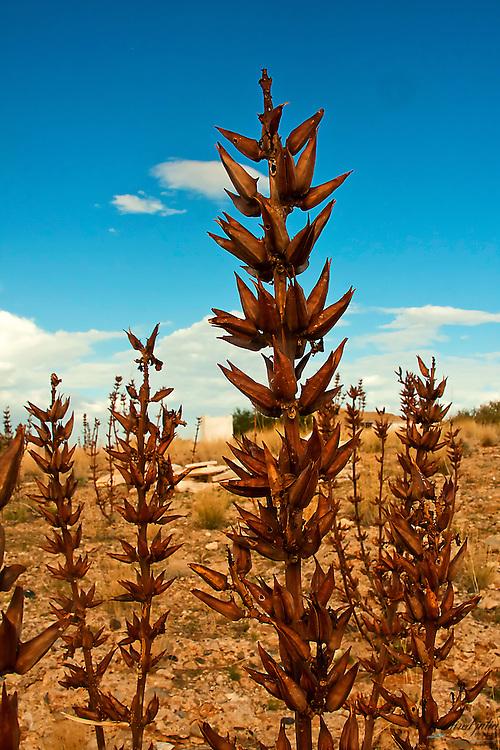Desert plant against vivid blue sky.