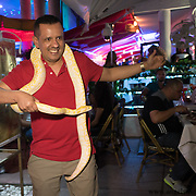 MIAMI BEACH, FLORIDA, NOVEMBER 4, 2016<br /> Richard Zamora, a visitor from Ecuador, poses with a snake for a photo in Miami Beach's popular Ocean Drive on a Friday night. Recent incidents of violence and crime are pushing the city of Miami Beach to try to alter the appeal of the area.<br /> (Photo by Angel Valentin/Freelance)