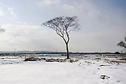 A solitary tree stands among the snow in a now deserted district of Higashi-Matsushima,  Miyagi Prefecture on Feb. 28, 2012. .Photographer: Robert Gilhooly
