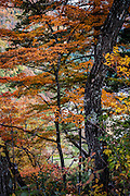 Autumn has arrived at the mountains outside the village of Ogimachi, in the Shirakawa-go area, turning tree leaves from gree to shades of orange and red.