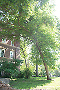 college green, Mapp Athens, summer, Tree Tour, Scarlet Oak