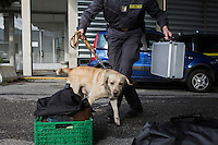 COMO, ITALY - 25 October 2013: A cash dog of Italy's Guardia di Finanza (Finance Guard) searches for undeclared cash among the personal belongings of a man suspected of smuggling money across the border with Swizerland by car in Como, Italy, at the border with Chiasso (Switzerland) on October 25th 2013. Cash dogs are sniffer dogs that have specially trained to detect the ink on currency notes. In the effort of cracking down on tax evasion and cash smuggling, the Guardia di Finanza works with highly trained dogs in outposts along its borders with Switzerland and France, and in international airports such as Rome Fiumicino and Milano Malpensa.<br /> <br /> In Italy, the law allows to travel with up to 10,000 euros in cash. Beyond that, one must declare to the authorities.<br /> <br /> In 2012, the Guardia di Finanza of the  borders with Chiasso in Switzerland have intercepted more than 55 million euros not declared. In 2013, until September 31st, they have intercepted more than 92 million euros.  The Guardia di Finanza of the Chiasso outpost has been using cash dogs since 2010.