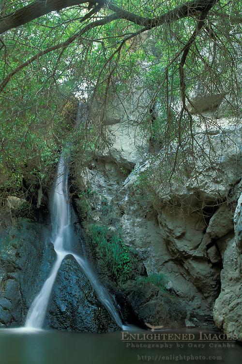Riparian habitat at Darwin Falls,  Darwin Canyon, Death Valley National Park, California