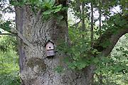 Starenkasten, alte Eiche, Naturschutzgebiet Kahle Haardt bei Scheid am Edersee, Nordhessen, Hessen, Deutschland | old oak tree, nature reserve Kahle Haardt near Scheid on Lake Eder, Hesse, Germany
