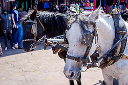 Horses used to pull carriages with tourists on sightseeing trips around Marrakech, Morocco, North Africa<br /> <br /> (c) Andrew Wilson | Edinburgh Elite media