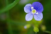 Wildflowers and Fungi