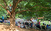 Aiden Hunicutt finds a spot in the tree overlooking Saturdays in Saxapaphaw.