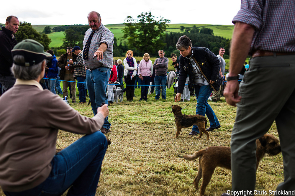 The Wells, Bedrule, Bonchester Bridge, Hawick, UK. 26th July 2015. Border terriers are judged at the Jedforest Hunt Hound, Terrier & Lurcher show in the Scottish Borders.