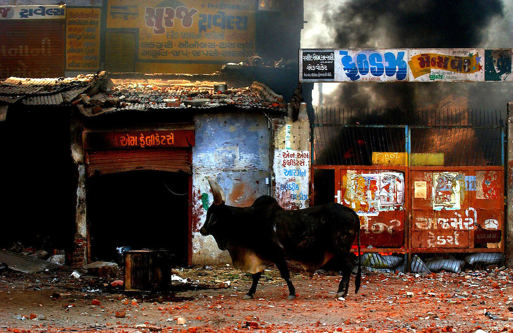 A lone bull walks through the streets of Ahmedabad in Gujarat, India after it was ravaged by a bloody spree of communal riots that killed an untold number and seriously threatens India's secular credentials on March 1, 2002. Officials put the death toll at more than 1000 but human rights groups and opposition parties say it is closer to 2,000 people killed.