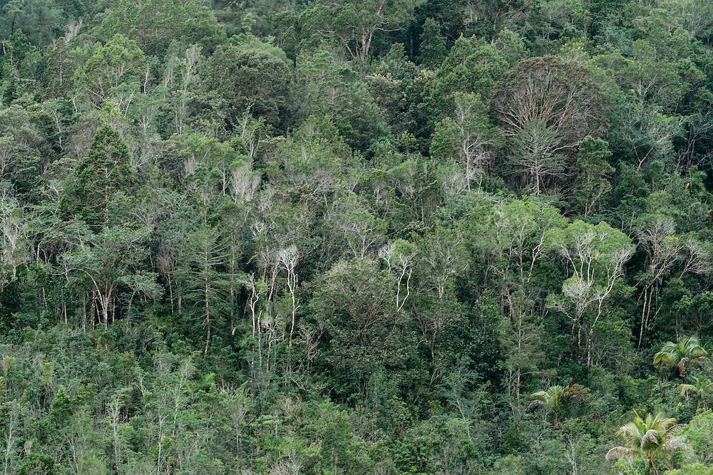 Trees along the hillsides near Taco Bay, Eastern Cuba on Jan 26, 2016.