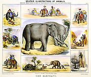 The Elephant: Transport; Food; Ivory; Draught. Hand-coloured lithograph, Thomas Varty, published London c1850. From 'Graphic Illustrations of Animals and Their Utility to Man'.