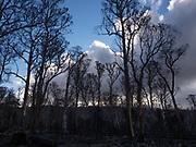 A very recent bush fire came through here —
