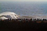 People Watching Waves and Surfers at the Wedge Newport Beach