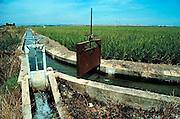 Spanje, Extremedura, 1999Irrigatie kanaal t.b.v. landbouw. waterhuishouding, droogteFoto: Flip Franssen