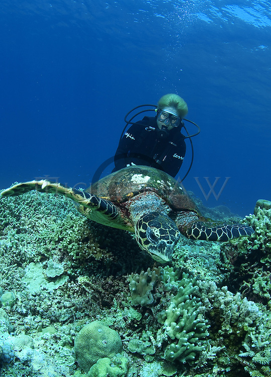 (Multiple values)coral reef Philippines, diver with hawksbill turtle