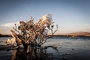 Plastic tree #63