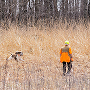 Photography was made during field practice at Rock River Kennels, in Beaver Dam, WI, April 30, 2018.  A beautiful Spring day!