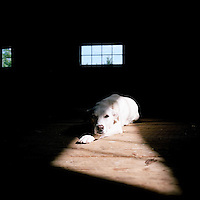 rescue dog lays in natural light.