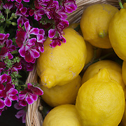 Lemons and Flowers, Riomaggiore, Italy
