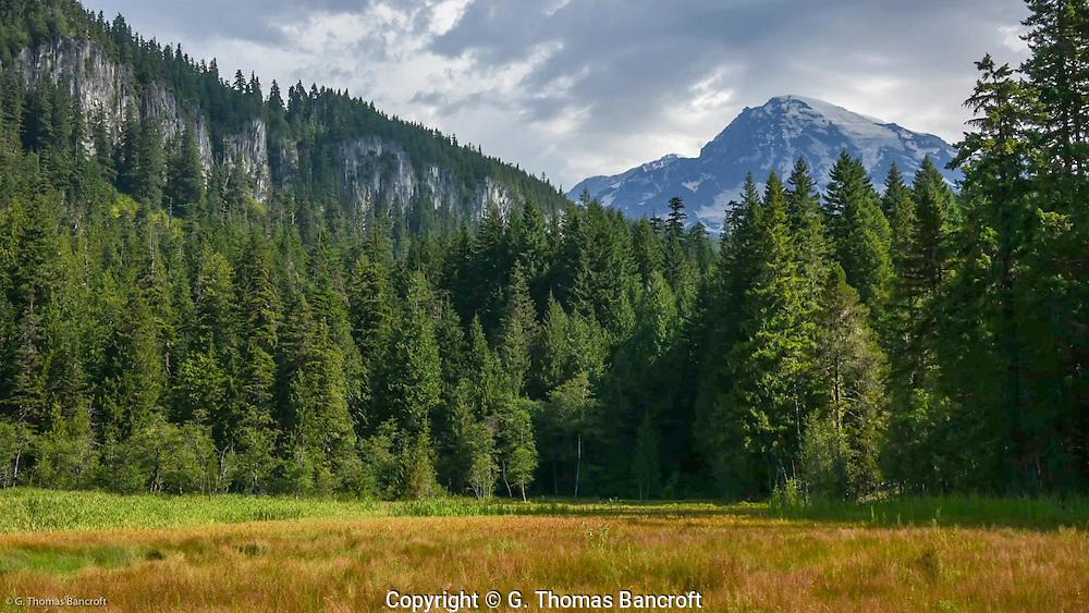 Rampart Ridge rises behind Longmire Meadows.