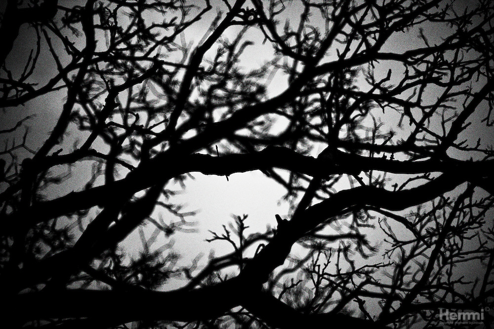 Silhouette of trees.