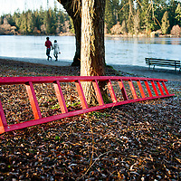 A bright red ladder laying against a tree at Lost Lagoon.