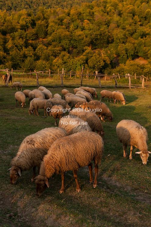 Azerbaïdjan, campagne région autour de la ville de Sheki // Azerbaidjan, country side around Sheki town