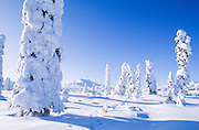Alaska. Eureka. Winter scenic.
