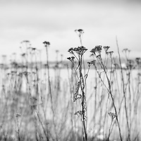 Wall weeds with flowers and boken along the ocean in the rain.