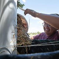 Darrell Yazzie Jr., 25, places the Johnson Su compost mix into the storage containers at the Spirit Farm in Vanderwagon Friday.