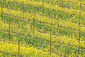 California Wine Country Stock Photography