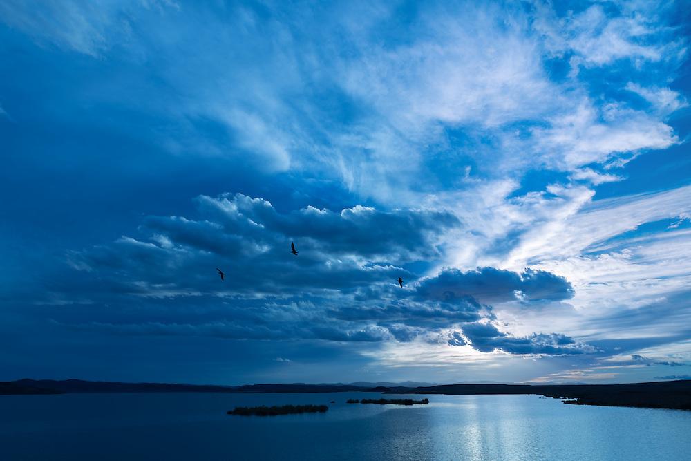Birds flying against dark cloudy sky over water.