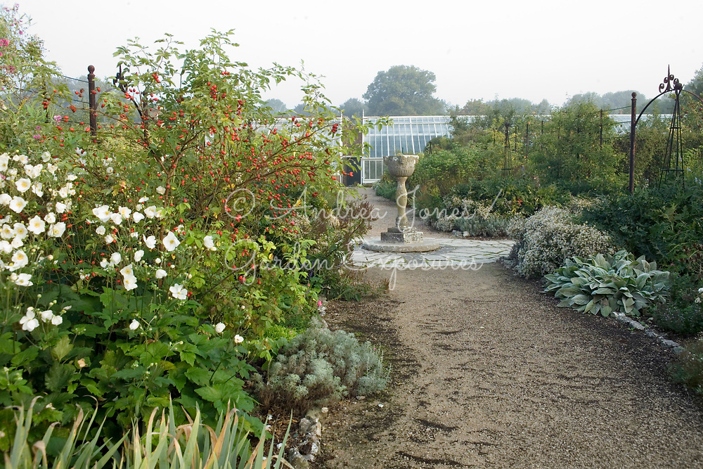 Long borders including Japanese anemone and rose hips in the Fruit Garden looking to a stone urn and glasshouses.<br /> West Dean Gardens, West Sussex, England