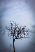 A bare tree at La Mongie, ski resort in France, in a thick fog.
