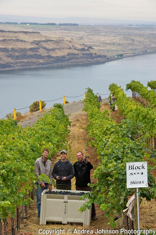 Long Shadows Vintners winemaker Gilles Nicault at Benches Vineyard harvest 2011, Horse Heaven Hills, Washington