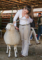 A last minute touchup before the Sheep fit and show at the Sandwich Fair.  (Karen Bobotas Photographer)
