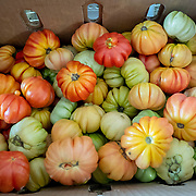 JULY 20, 2018---HATO REY, PUERTO RICO----<br /> Tomatoes to be used to food to be delivered during the day as part of the World Central Kitchen initiative in Puerto Rico which came to prominence following the aftermath of the devastation left by Hurricane Maria in Puerto Rico. <br /> (Photo by Angel Valentin/Freelance)