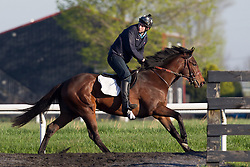 Conor Murphy is the, 20 something Irishman, who won an impossible bet that turned $50 into nearly $2 million. He moved to Louisville, bought a house and is now a trainer on his own. ..My Heetseeker with Murphy up works out, Thursday, April 25, 2013 at Skylight Training Center in Goshen.