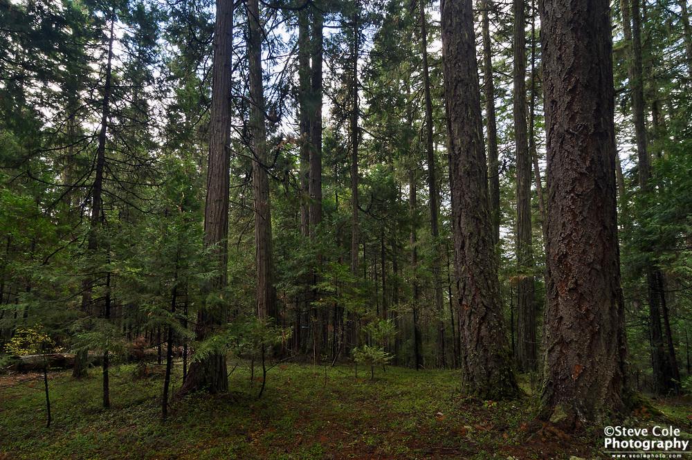 Woodchuck Timber Sale Unit 01 #3 - Days Creek