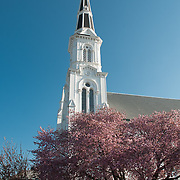The First Baptist Church of Wakefield, MA, sports a classic white steeple. A pink cherry tree adorns the lawn.
