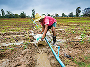 20 JANUARY 2016 - SI LIAM, BURI RAM, THAILAND:  A farmer spreads irrigation water in a field on a farm in Si Liam, Buri Ram. The drought gripping Thailand was not broken during the rainy season. Because of the Pacific El Nino weather pattern, the rainy season was lighter than usual and many communities in Thailand, especially in northeastern and central Thailand, are still in drought like conditions. Some communities, like Si Liam, in Buri Ram, are running out of water for domestic consumption and residents are traveling miles every day to get water or they buy to from water trucks that occasionally come to the community. The Thai government has told farmers that can't plant a second rice crop (Thai farmers usually get two rice crops a year from their paddies). The government is also considering diverting water from the Mekong and Salaween Rivers, on Thailand's borders to meet domestic needs but Thailand's downstream neighbors object to that because it could leave them short of water.       PHOTO BY JACK KURTZ