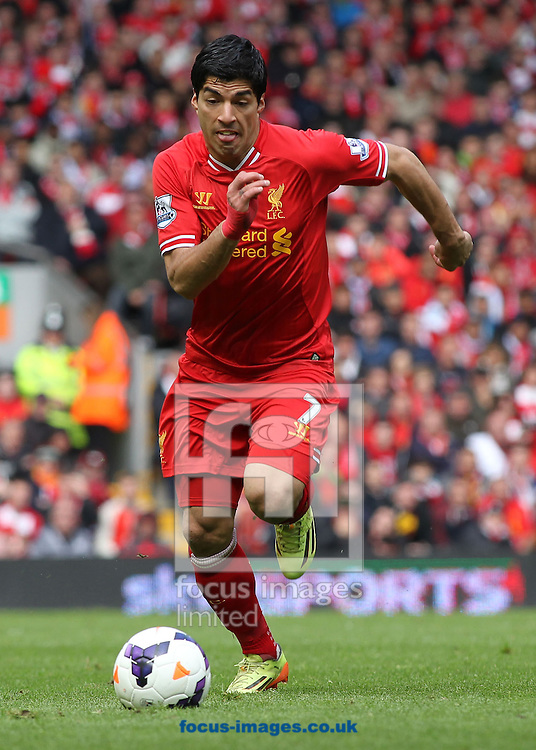 Luis Suarez of Liverpool in action against Newcastle United during the Barclays Premier League match at Anfield, Liverpool.<br /> Picture by Michael Sedgwick/Focus Images Ltd +44 7900 363072<br /> 11/05/2014