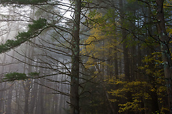 Trees in Connecticut on a foggy day