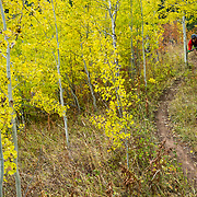 Andrew Whiteford rides the Putt Putt Trail singletrack off of Snow King Ski Area in Jackson, Wyoming.