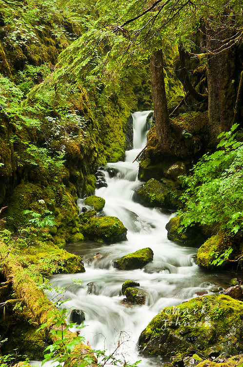 A beautiful stream flowing through a temperate rainforest, Tongass National Forest, Sitka, Alaska