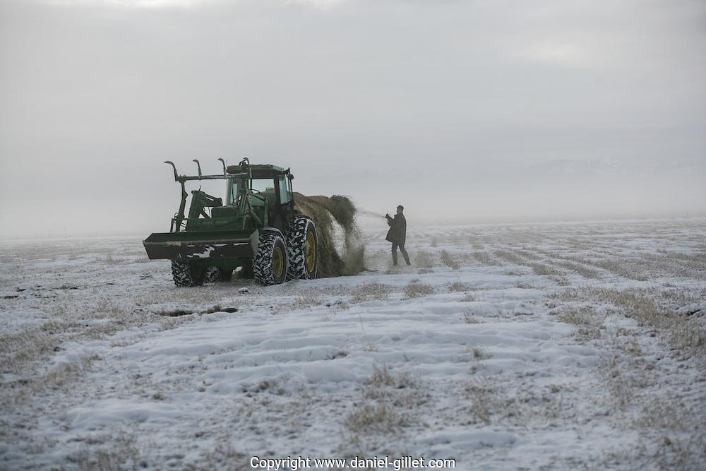 Reportage sur Tom, eleveur de betail a Belgrade au Montana, USA//Report on Tom, farmer in Belgrade, Montana, USA